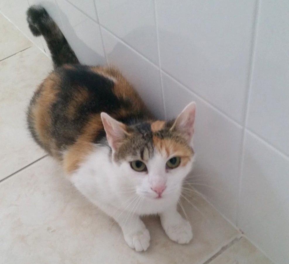 Postrelená mačička Izy